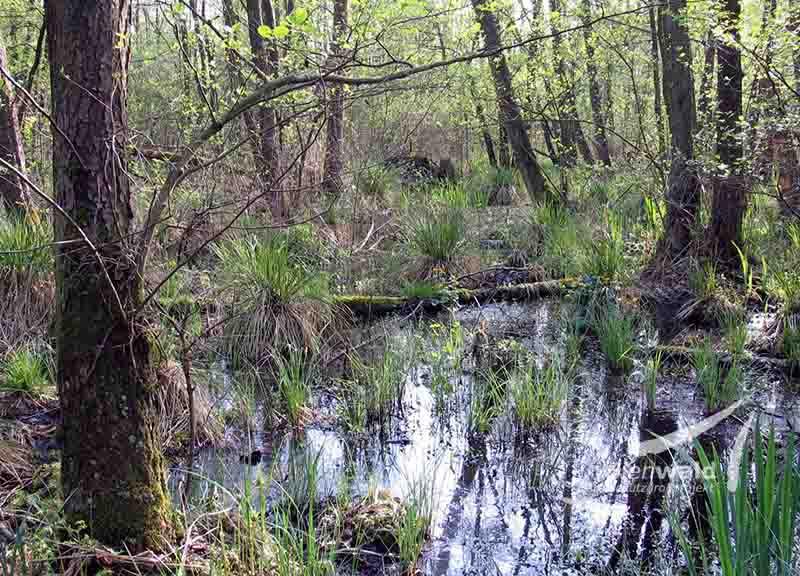 nasser Auwald