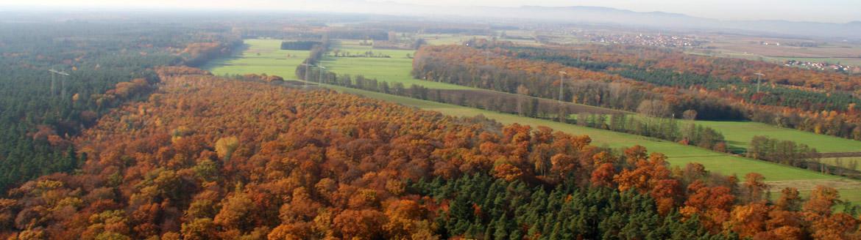 Luftbild Bienwald